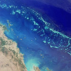 Great Barrier Reef von Korallenbleiche betroffen