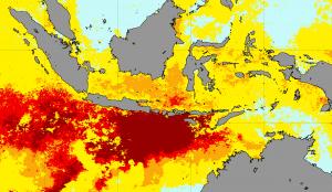 Korallenbleiche in Indonesien April 2016