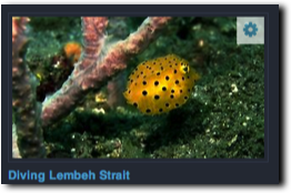 Videos: Tauchen in Lembeh